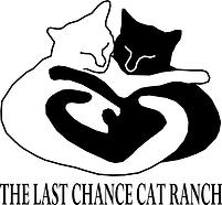 last chance cat rach