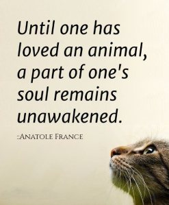 anatole-france-quote-about-animal-love