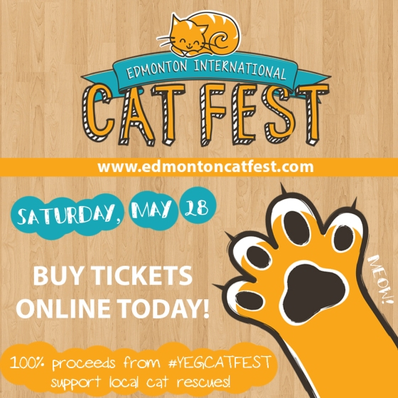 960x960-Cat-Festival-Generic-5.jpg