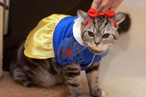 cat-costume-1