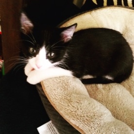 Tux as a baby
